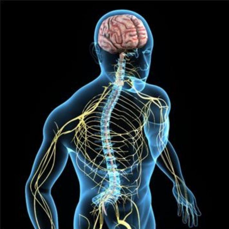 Autonomiczny układ nerwowy